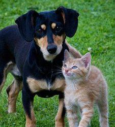 2000 animais errantes esterilizados ao abrigo do programa de esterilização, vacinação antirrábica e identificação eletrónica, promovido pela AMRAM