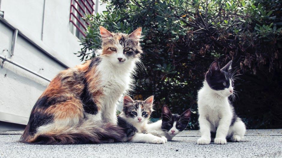 1000 Animais errantes esterilizados ao abrigo do Programa de Esterilização, Vacinação Antirrábica e Identificação Eletrónica, promovido pela AMRAM